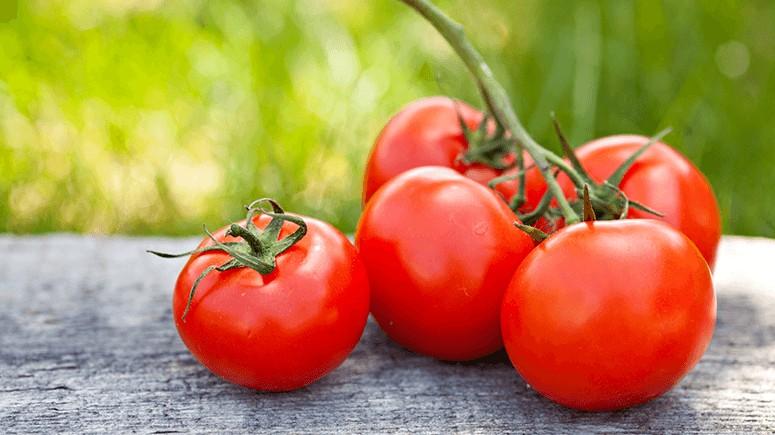 tomatoes-5