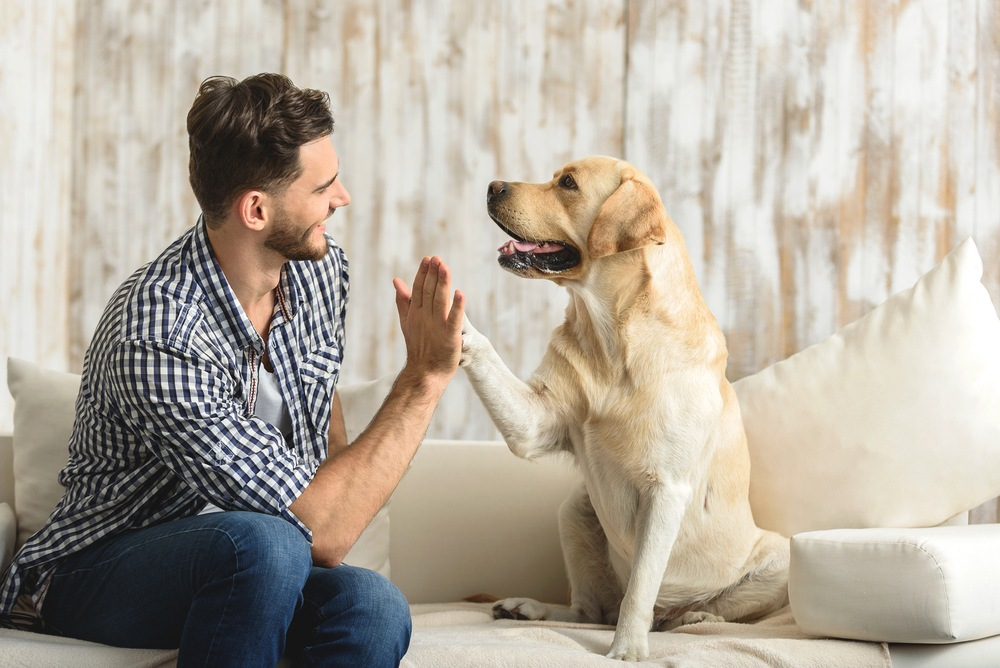 8 Most Common Diseases from Your Pet wellness captain