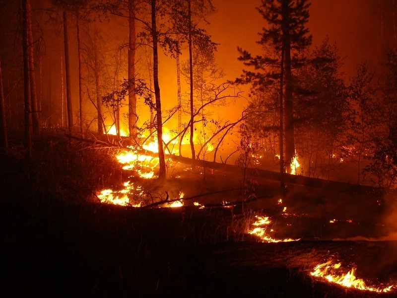 Wellness Captain Wildfires Affect Your Health