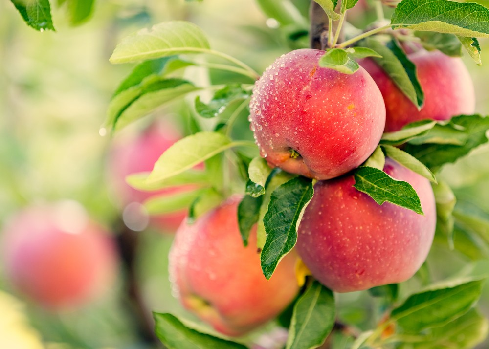 Wellness Captain Apples Health Benefits
